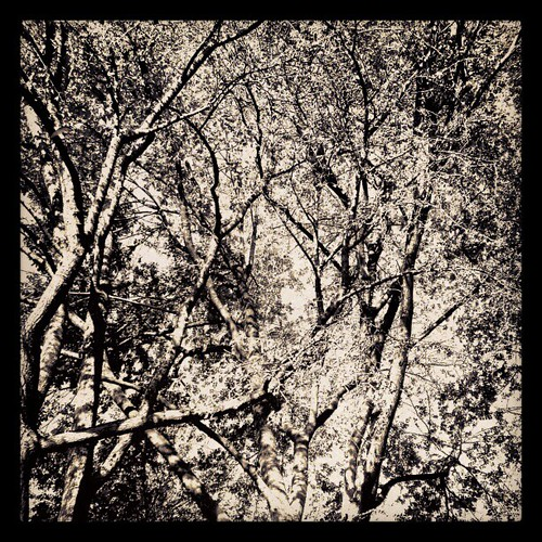 #monochrome #b&w #trees #nyc by ShellyS