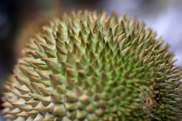 The beautiful spiky durian fruit!
