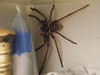 Bathroom Huntsman 002