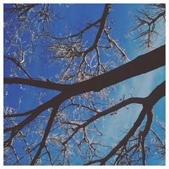 leafless. #lookingup #denverzoo #vscocam