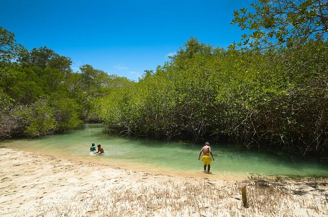 Niños bañandose entre los manglares