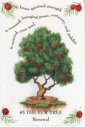yew tree magick yvonne yvette