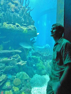 Dennis Enjoying Lisbon Aquarium