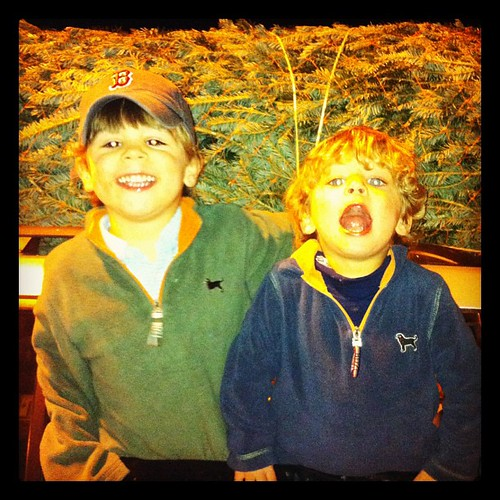 Crazy boys getting our Christmas tree