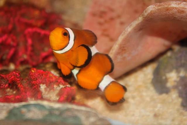 Sea life Blankenberge