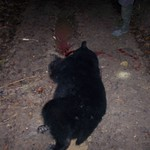 Illegally killed black bear found in the Avoyelles Parish (3)