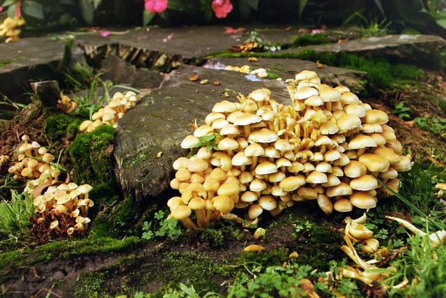 mushroom wild