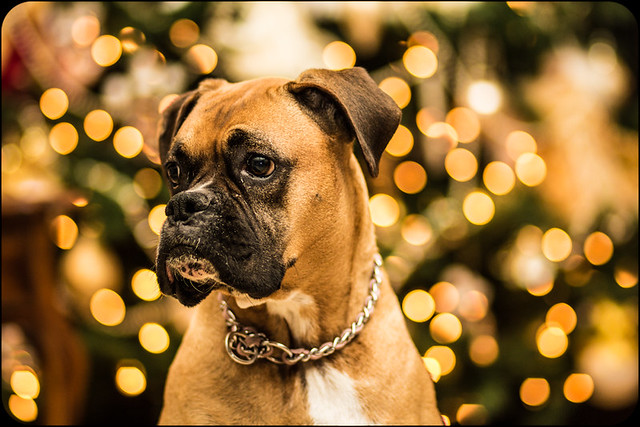 Belle Christmas Bokeh