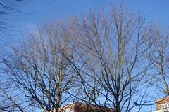 blue winter sky and trees, before my building by Julie70