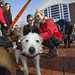 20121208_mac_dogdays_163