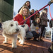 20121208_mac_dogdays_078