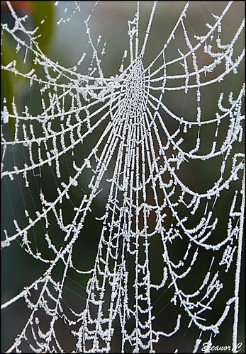 garden frost december spidersweb blinkagain