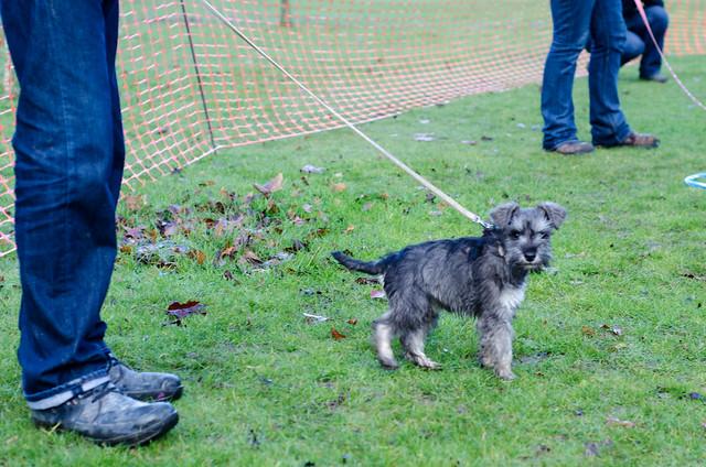 Celebrity Dog Training Lehigh Acres