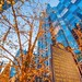 The top of PPG Place is seen through trees with Christmas lights HDR by Dave DiCello