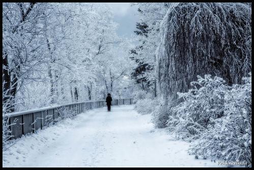 winter snow cold water finland frozen lumi talvi tampere satama sininenhetki kylmä pakkanen mustalahti