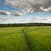 Fields Above Lower Slaughter by IceNineJon