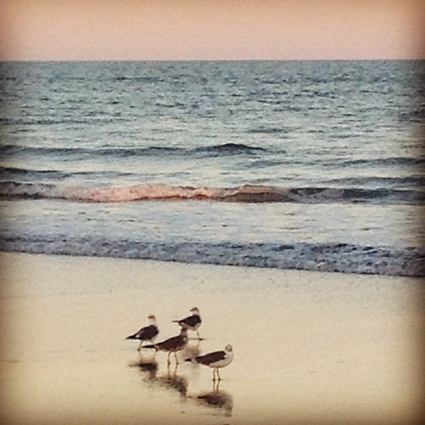 Hanging out with the birds on Cocoa Beach in Florida.