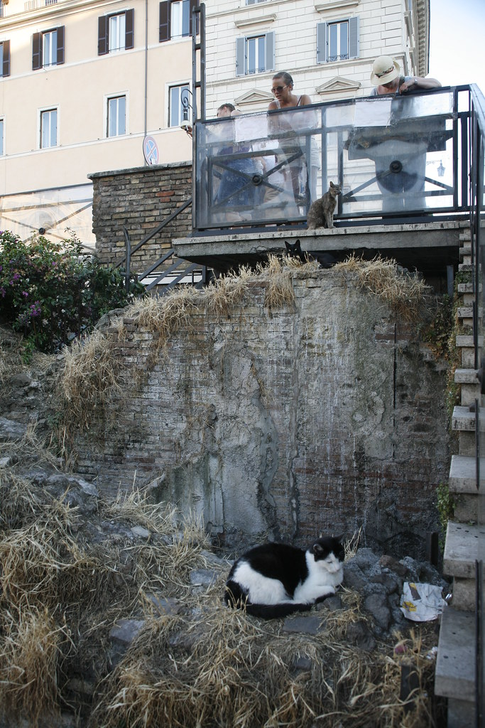 People look at the black and white stray cat