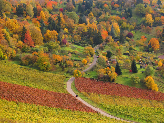 Autumn Colors in the Vineyard