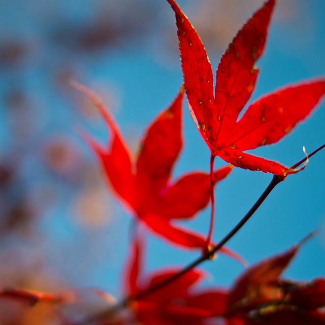 Autumn is a bittersweet season