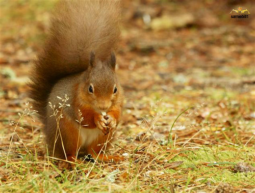 Hide those nuts time by sarniebill1