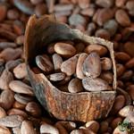 Cocoa Beans at Chocolate Mayordomo - Oaxaca, Mexico