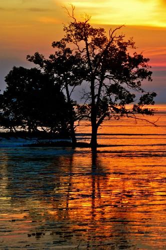 trees sunset colors paradise silhouettes johor muar westmalaysia