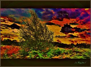 Colors in the wind  -  Couleure dans le vent  -  Colori nel vento  -  Cores ao vento  -  Colores en el viento