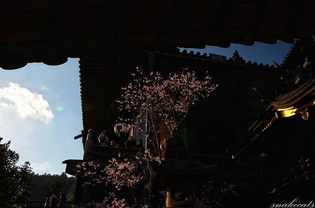 「寒桜映える」 長谷寺 - 奈良