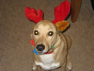 Ellie with antlers 2009