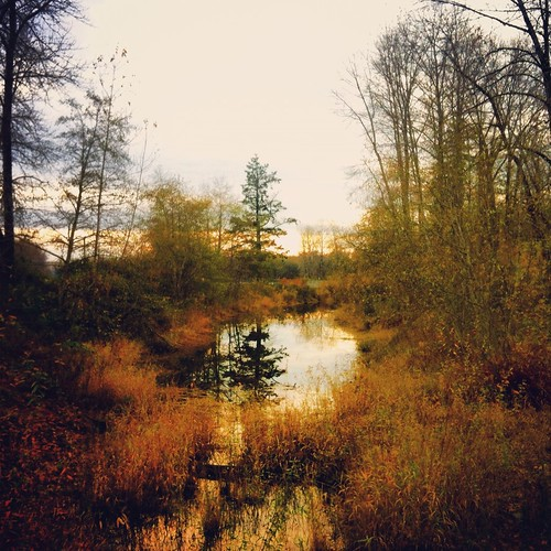 cameraphone camera november autumn trees sunset reflection fall nature water oregon forest landscape evening iphone wildernesspark willamettevalley stayton iphone4 iphoneography instagram