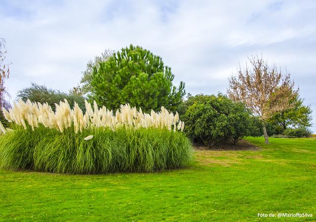 Foto Parque Juan Carlos I - LXXVII