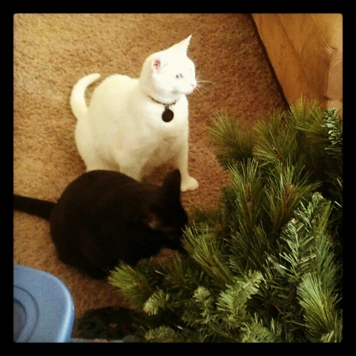 Kitties so naughty and excited for Xmas!