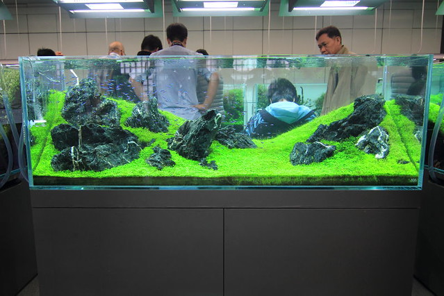 Captivating Re: Some Pics From ADA Galery 2012 For Your Aquascape Inspiration