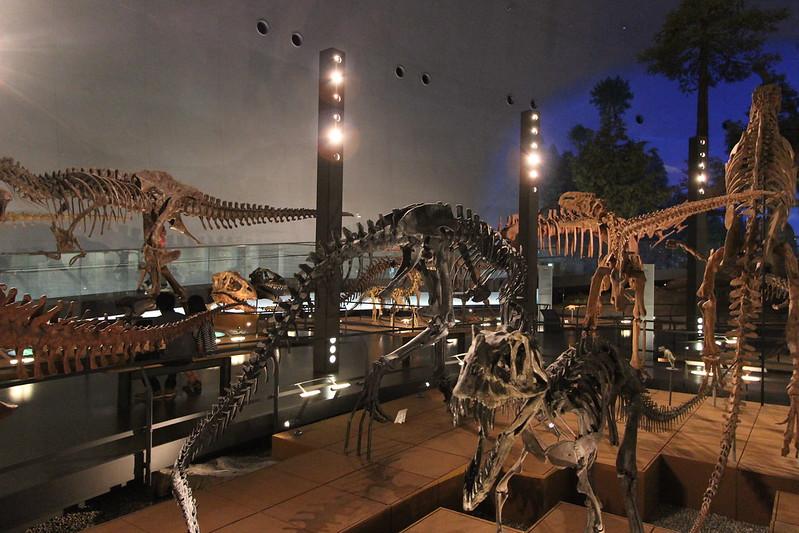 福井県立恐竜博物館 骨格模型 その3