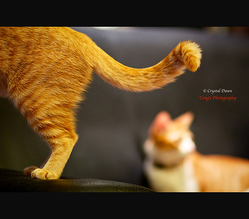 A Playful Tail by © Crystal Dawn Photography