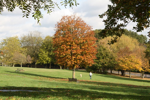 Autumnal Eaglesfield Park