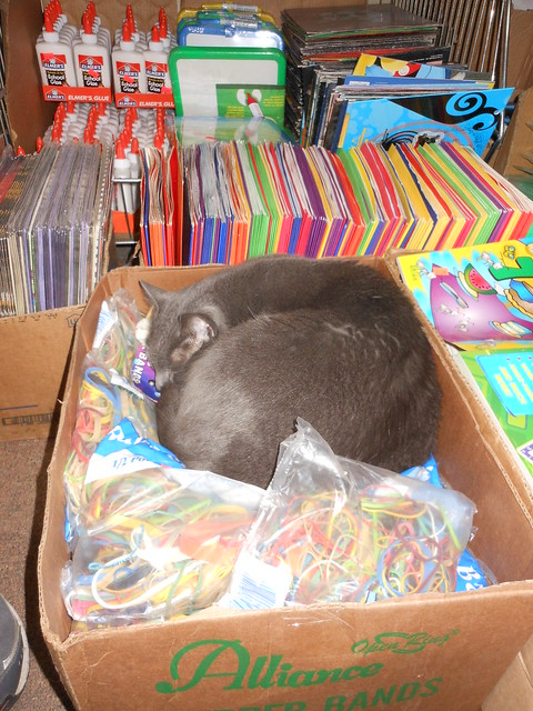 Cat asleep in the 99 cent store