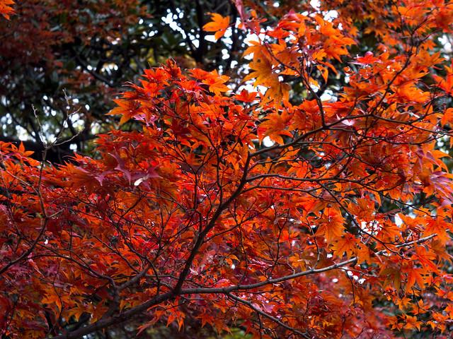 #撮 新宿御苑に紅葉を撮りに行ったついでに五ノ神製作所で海老つけ麺!