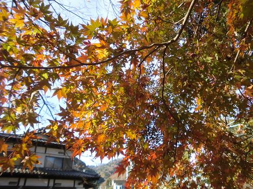 20121203高尾山011
