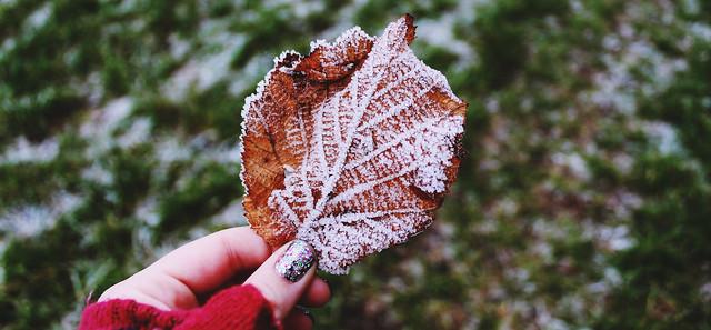Frosty Plants 4
