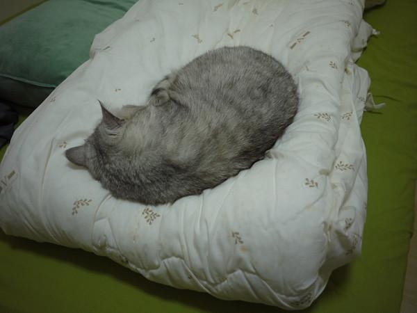1冬天到了,厚棉被一拿出來就被QQ給佔據了