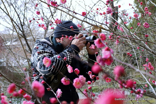 man-with-pink-cherry-blossoms-kyoto.jpg