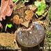 柯丁誌_撥開雜草,終於見到小雨蛙的真面目