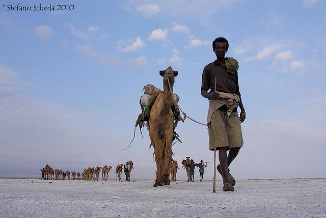 Salt caravan - Ethiopian Danakil
