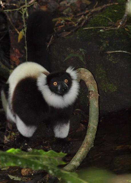 Madagascar Mora Mora