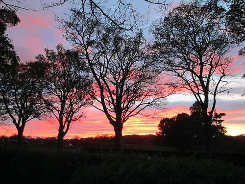 trees at sunset, first
