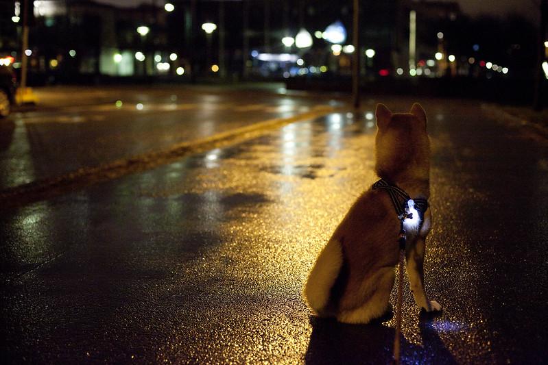 11/11 (November rain)