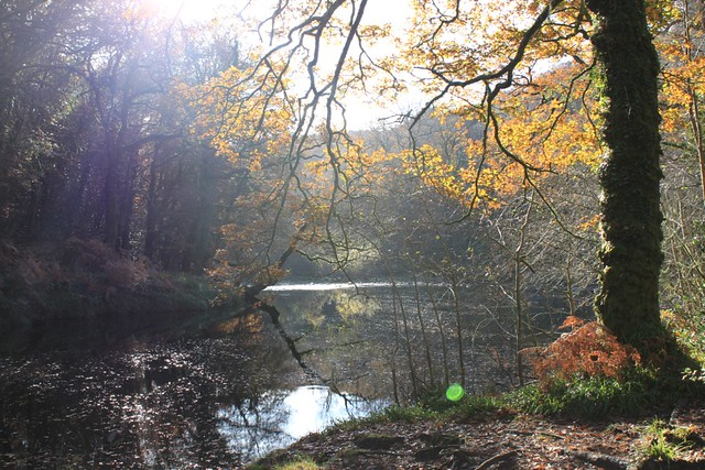 The river Dart, Hembury Woods