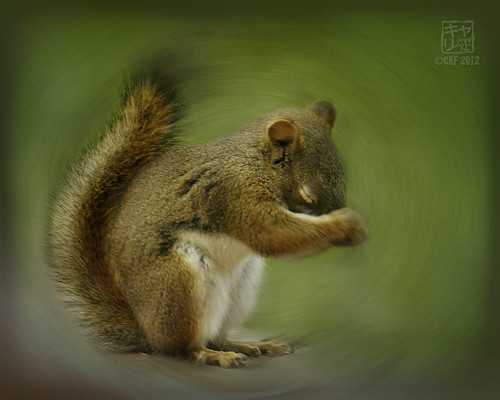 Squirrel Spinning